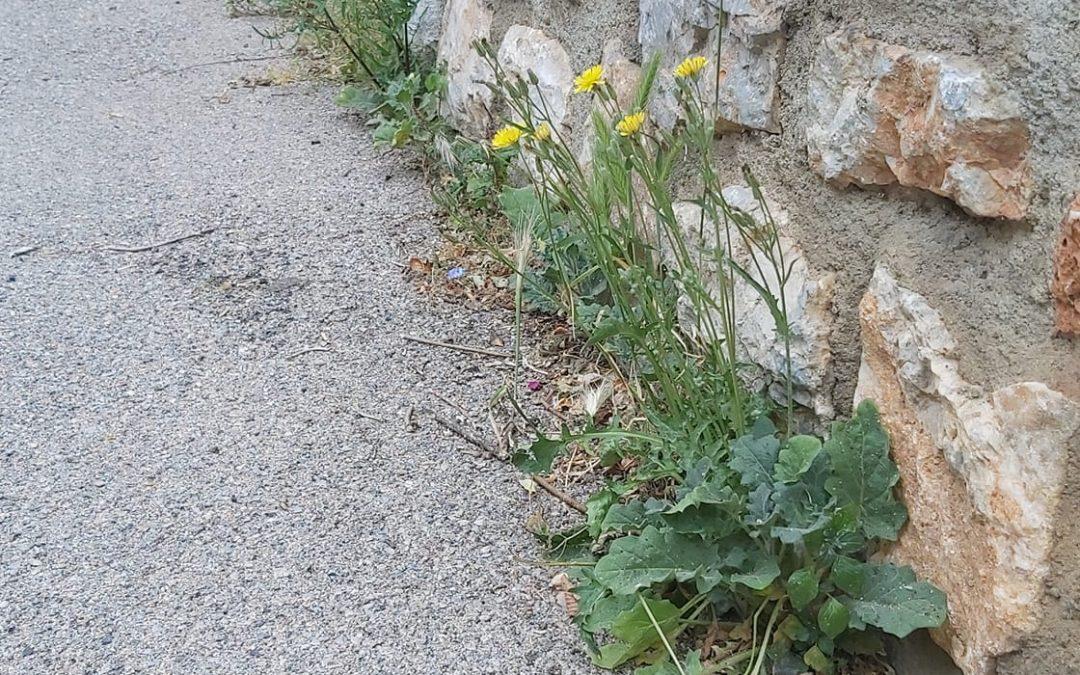 Fauchage des herbes dans le village